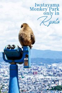 Add this Monkey Park in Kyoto to your bucket list!