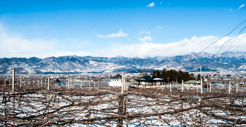 Wineries and mountains of Yamanashi